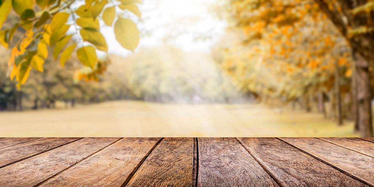 sfondo con prato autunnale circondato da alberi e pavimentazione in legno in primo piano